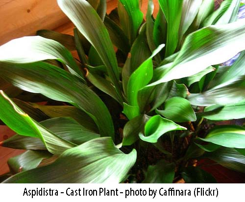 House plants pictures and names - Plants for every room in your home extra comfort and health ...