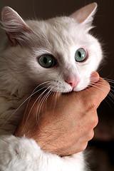 cat-bite-21346389.jpg