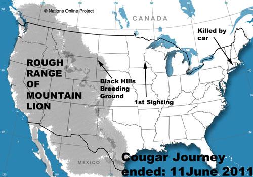 U S Mountain Lion Population Do you think sp...
