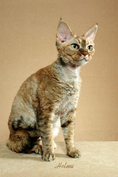 pogo cat battle cats