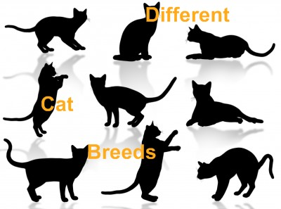 http://www.pictures-of-cats.org/images/different-cat-breeds.jpg