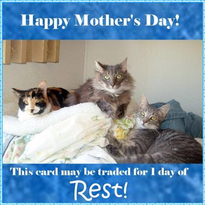 funny mother quotes. Funny+mother+day+cards