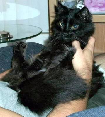 Cute Girl Cat Names Yahoo Answers
