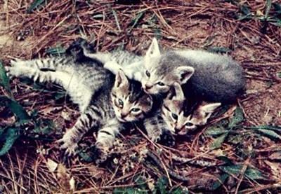 Miss Tiger's Babies