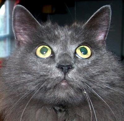 november is adopt a senior cat month 21584205 art nudist beach