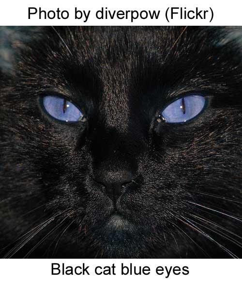 Ojos Azules Cat Picture   Katzz