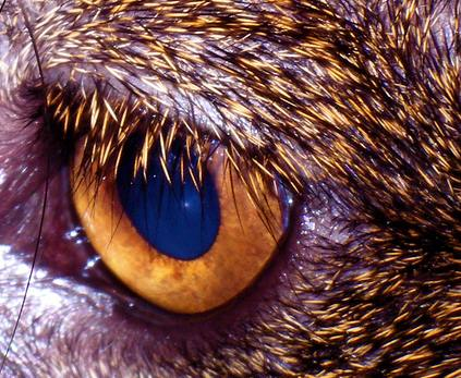 cat eyes close up. Here is a great close up