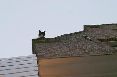 پناهگاه گربه های بی سرپرست