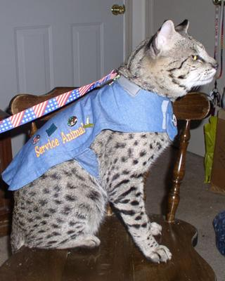 http://www.pictures-of-cats.org/images/we-are-safe-and-sound-and-lobbying-already-in-oklahoma-21345747.jpg