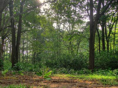 bengal tiger habitat