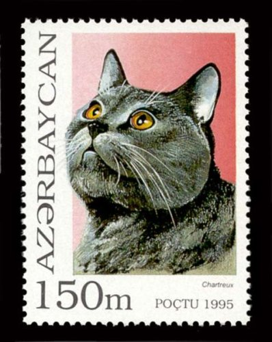 chartreux cat on a stamp