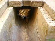 Drain Cat